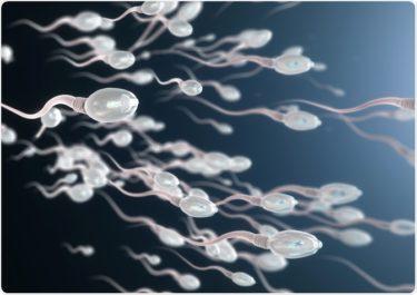 男性の生殖能力を高め、精子を増やすための10の方法